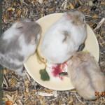 1307201220563037460 574 0 150x150 Hamster Trà Sữa