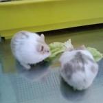 1319577396 bang.vn can ban hamster bo suatra suacacaotra sua khoan 13142823981407392805 574 0 150x150 Hamster Trà Sữa