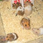 2472888975 4d79ddc82b 150x150 Hamster Bear