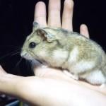 367450 150x150 Hamster Sóc