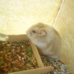 3979416225 fa8d1c57401 150x150 Hamster Trà Sữa