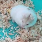 IMG 0665 150x150 Hamster Robo