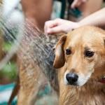 10 điều bạn làm khiến cún cưng ghét cay ghét đắng 2
